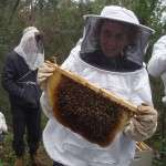 Beekeeping Workshop